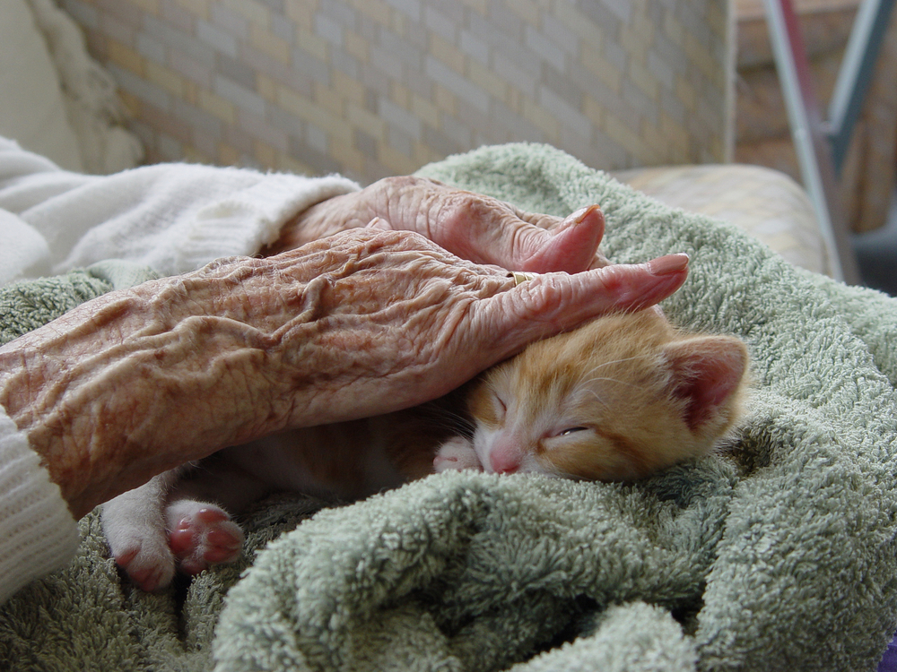 elderly woman stroking kitten