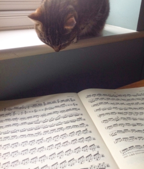 cat looking at sheet music