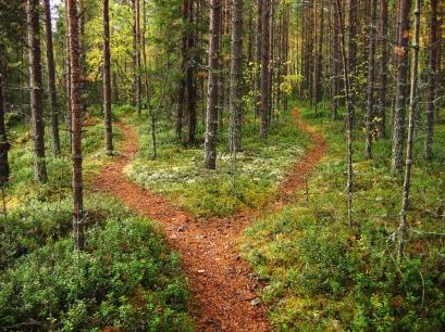 woodland path splits into two